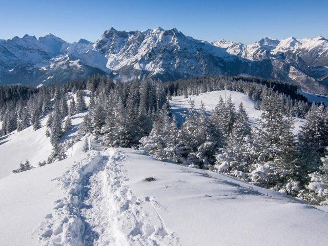 Заснеженные сосны и горы в Альпах Швейцария природа