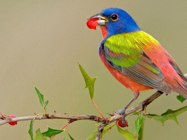 Сине зеленая персиковая птица с листом во рту сидит на ветке ягодного дерева птицы