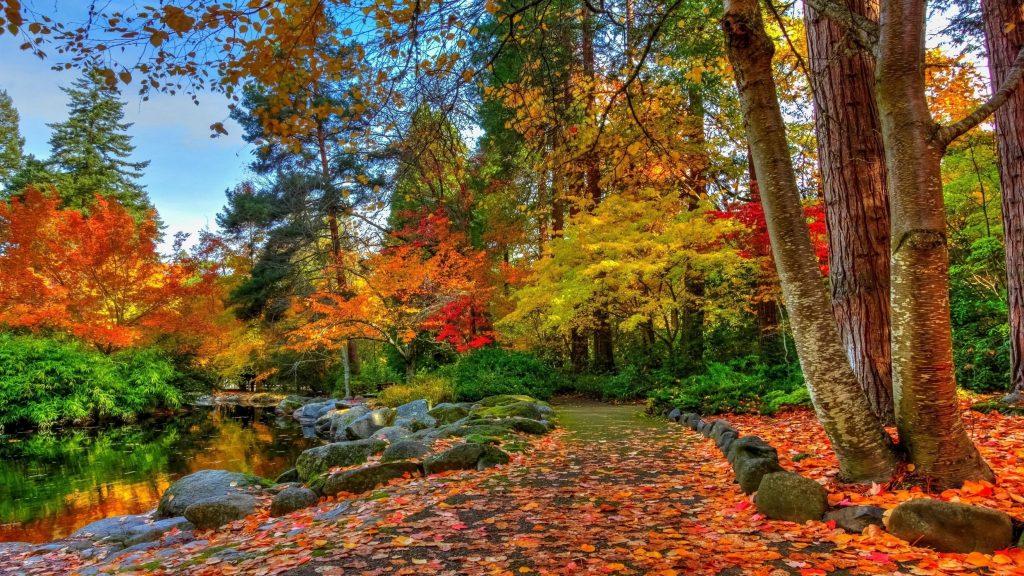 Тропинка с разноцветными сухими листьями между озером и осенними деревьями в лесной природе обои скачать