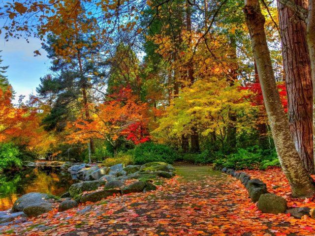 Тропинка с разноцветными сухими листьями между озером и осенними деревьями в лесной природе