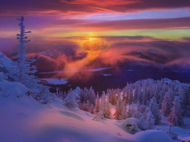 Заснеженная ель во время заката солнца под светло оранжевым небом природа