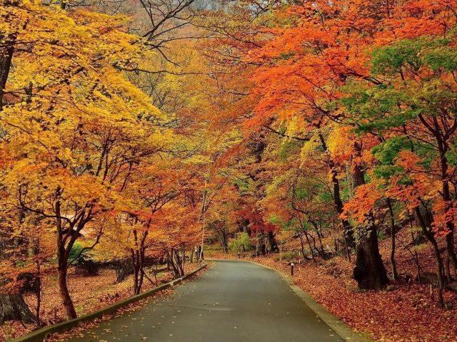 Красивая дорога между красочными осенними деревьями лесные фоновые пейзажи