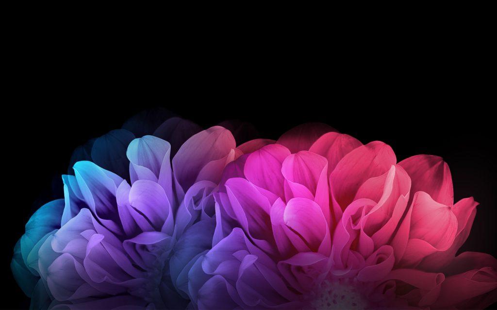 Красочные цветы на темном фоне. обои скачать