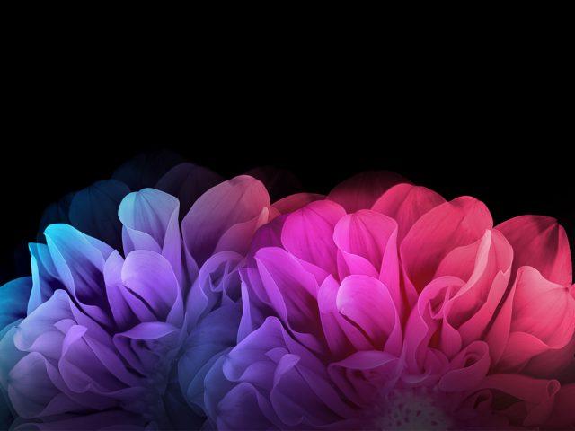 Красочные цветы на темном фоне.