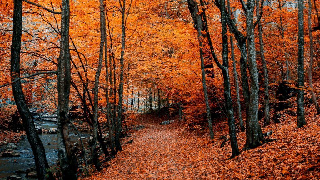 Оранжевые листья осенняя тропа листва природа обои скачать