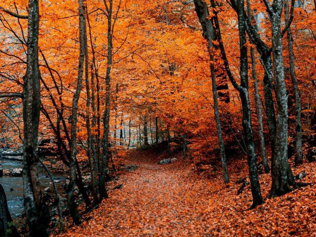 Оранжевые листья осенняя тропа листва природа