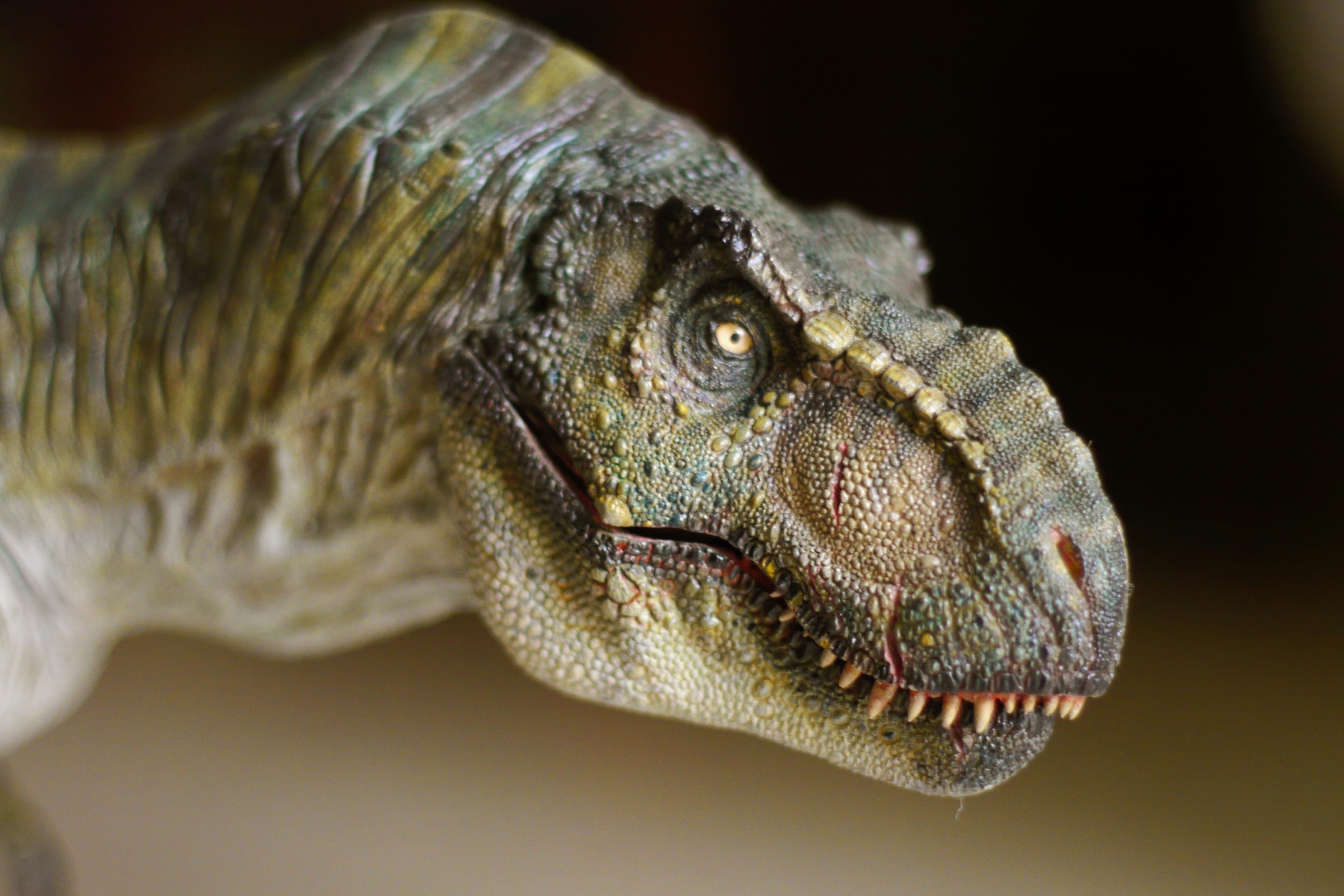 Т Рекс динозавров обои скачать