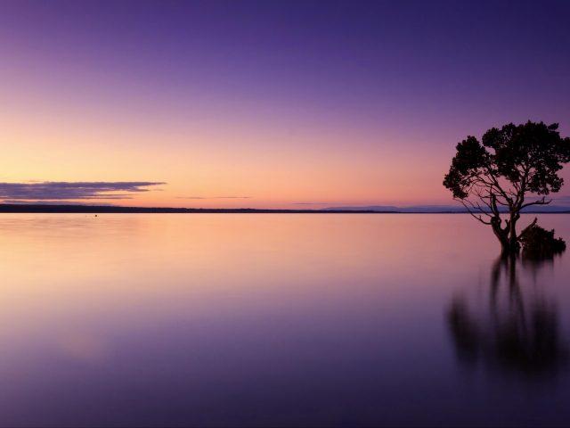 Закат дерево озеро