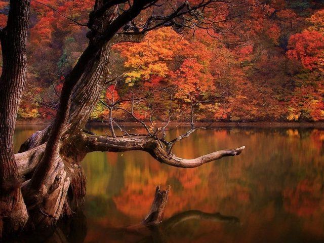 Река окруженная зелеными желтыми красными листьями осенних деревьев лес с отражением на воде природа