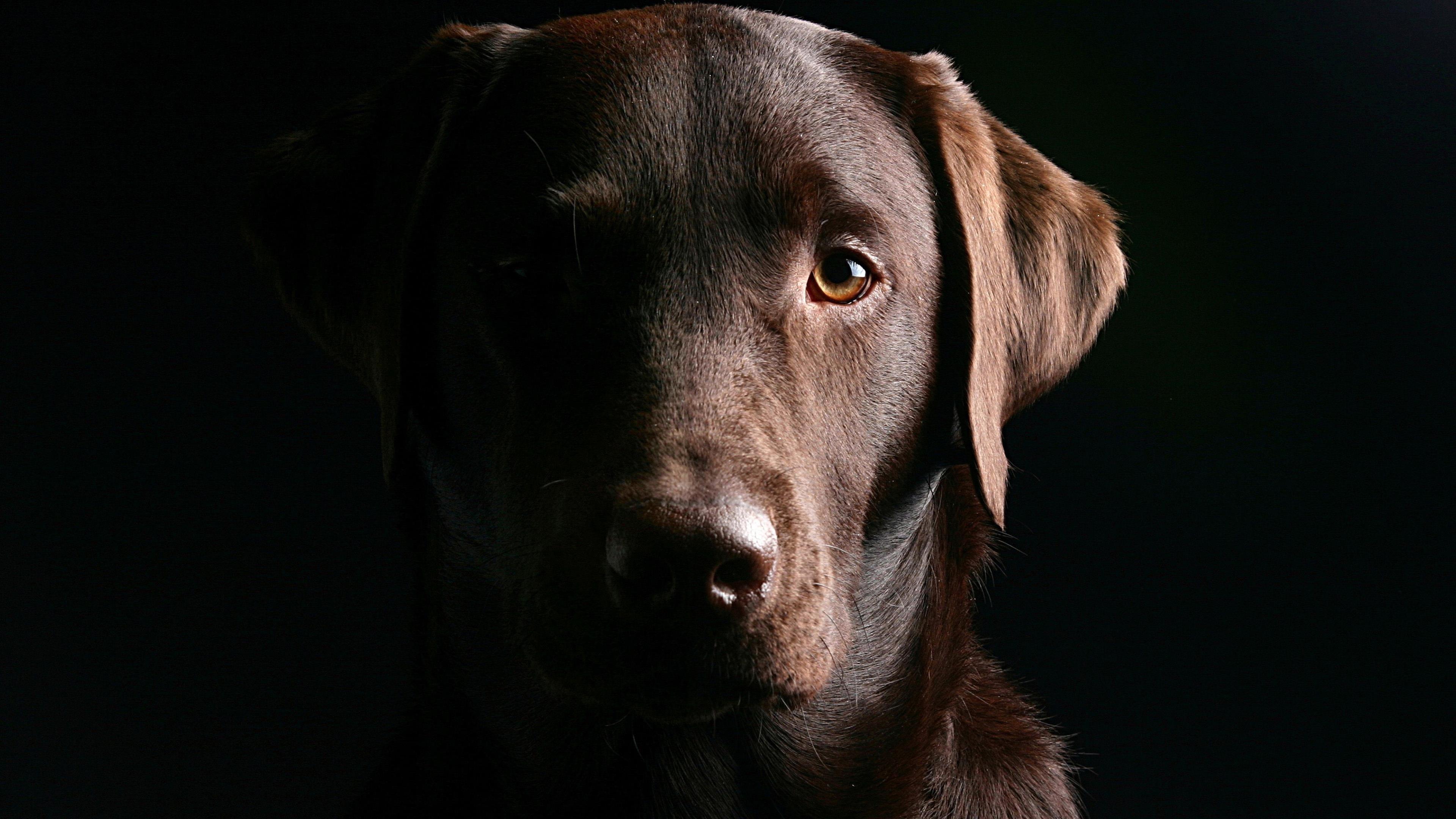 Черная собака обои скачать