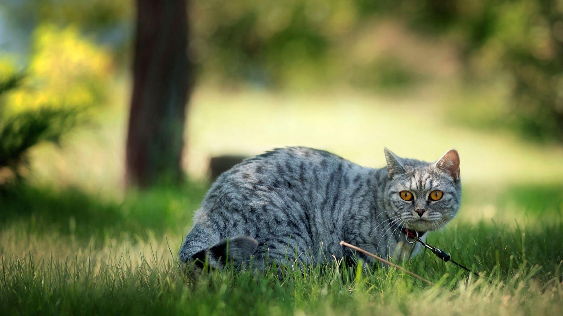 Животное кошка (2) животные обои скачать