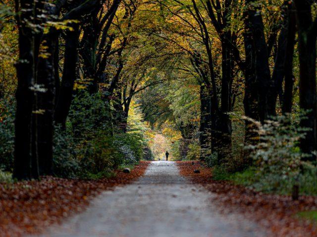 Дорожная дорожка между зелеными желтыми осенними деревьями растениями кустарниками природа