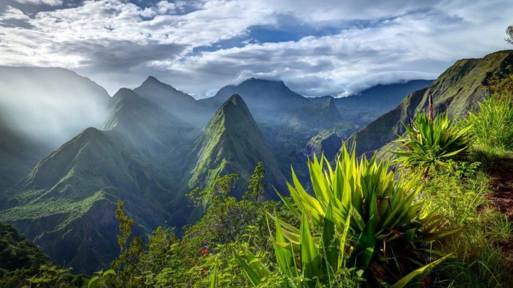 Крупным планом вид зеленых растений и пейзаж вид гор покрытых туманом под белым облачным небом природа обои скачать