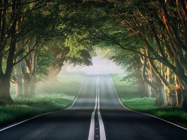 Туманная лесная дорога