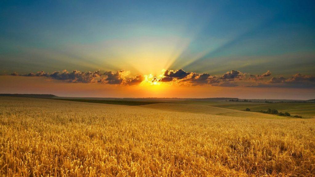 Прекрасный восход солнца пшеничное поле природа обои скачать