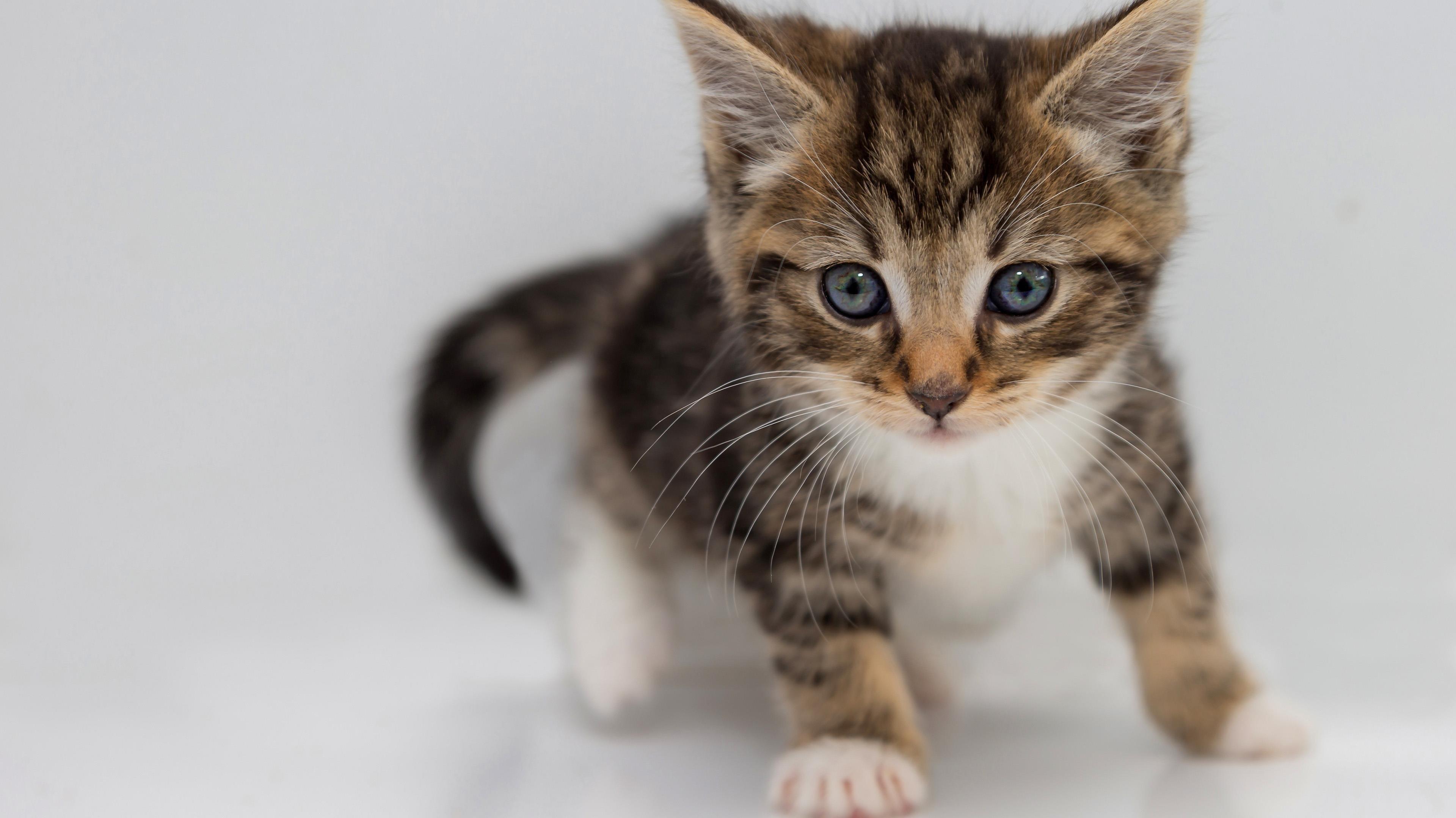 Животные кошки животные обои скачать