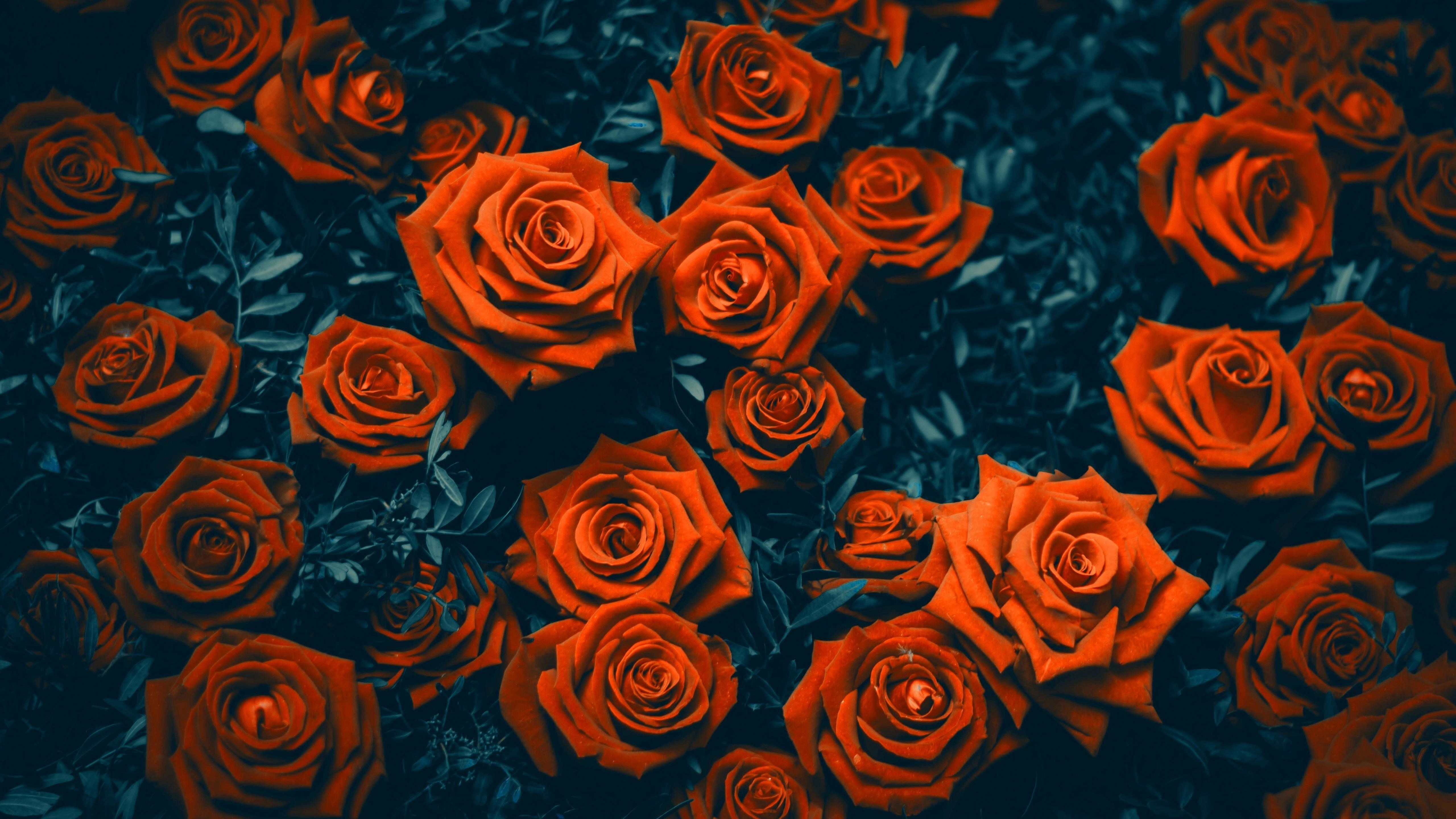 Розовые цветы обои скачать
