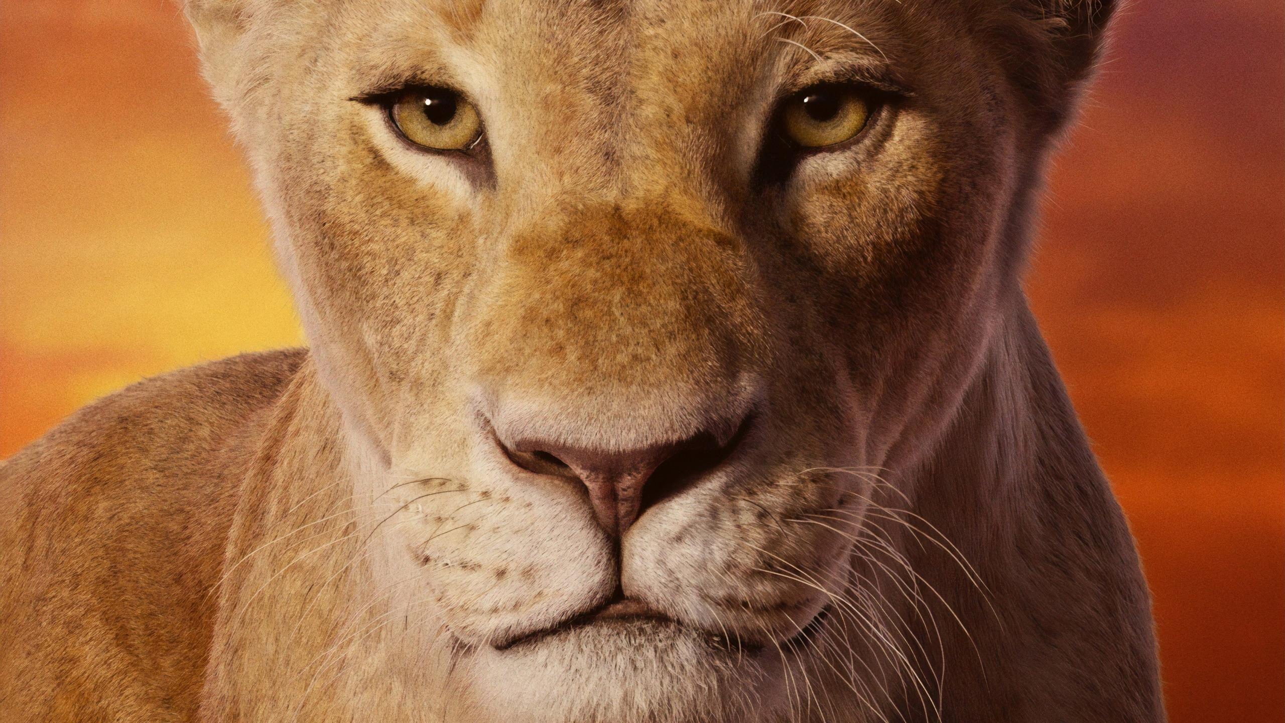 Симба с карими глазами Король Лев обои скачать