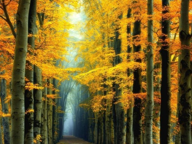 Тропинка между желтыми листьями деревьев в лесной природе