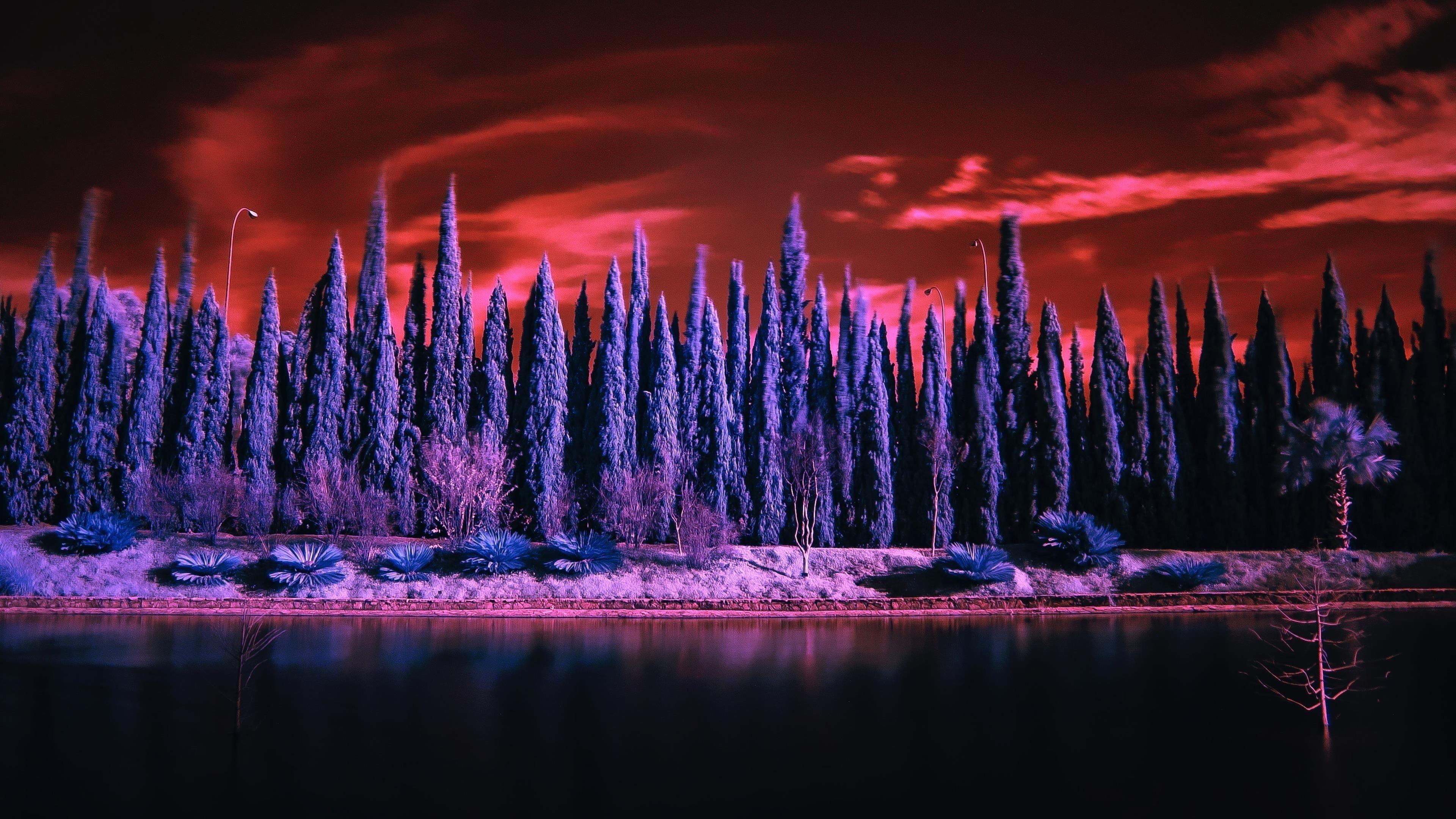 Красное небо Сосновый пейзаж обои скачать