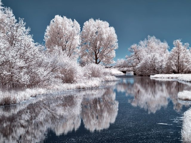 Замерзшие деревья в ледяном озере с отражением в дневное время природа