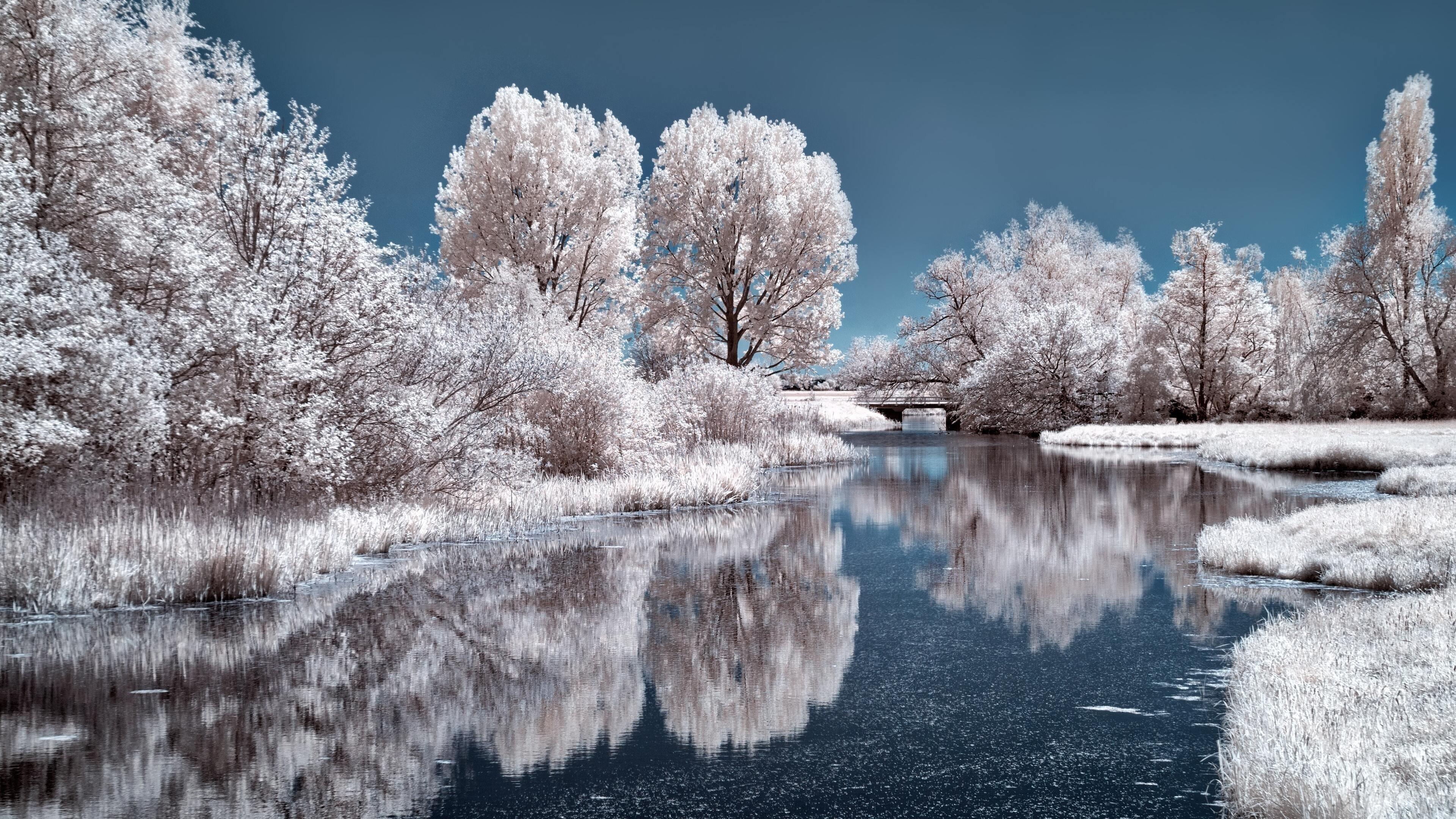 Замерзшие деревья в ледяном озере с отражением в дневное время природа обои скачать