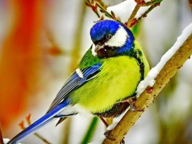 Зелено голубая красивая птица на заснеженной ветке дерева животные