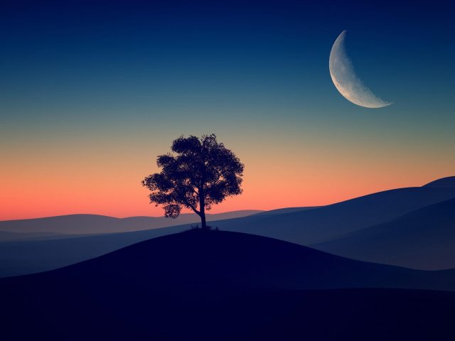 Одинокое дерево темный вечер