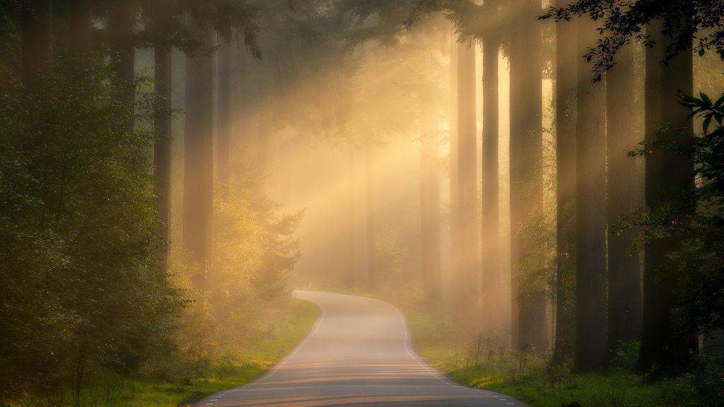 Тропинка между покрытыми туманом лесными пейзажами обои скачать
