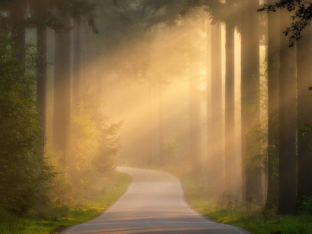 Тропинка между покрытыми туманом лесными пейзажами