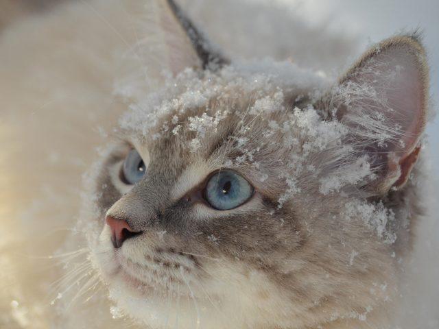 Животное кошка 1 животные