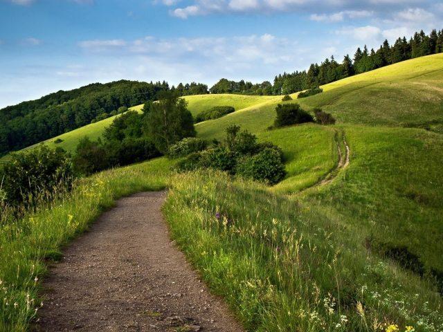 Тропинка между зеленой травой деревьями растениями цветами кустарниками склон поля на фоне голубого неба природа