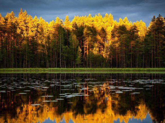 Желто зеленые лиственные деревья с отражением природы
