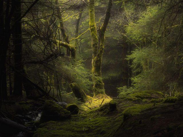 Лес, туман, ветки деревьев, мох