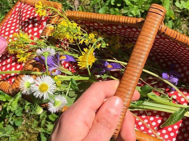 Маленькая корзинка с цветами дачный уход