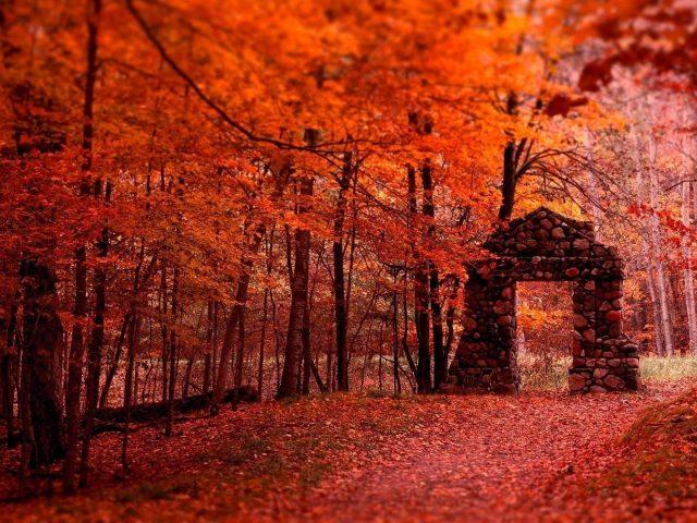 Камни вход красивые красные листья осенние ветви деревьев лесной фон природа
