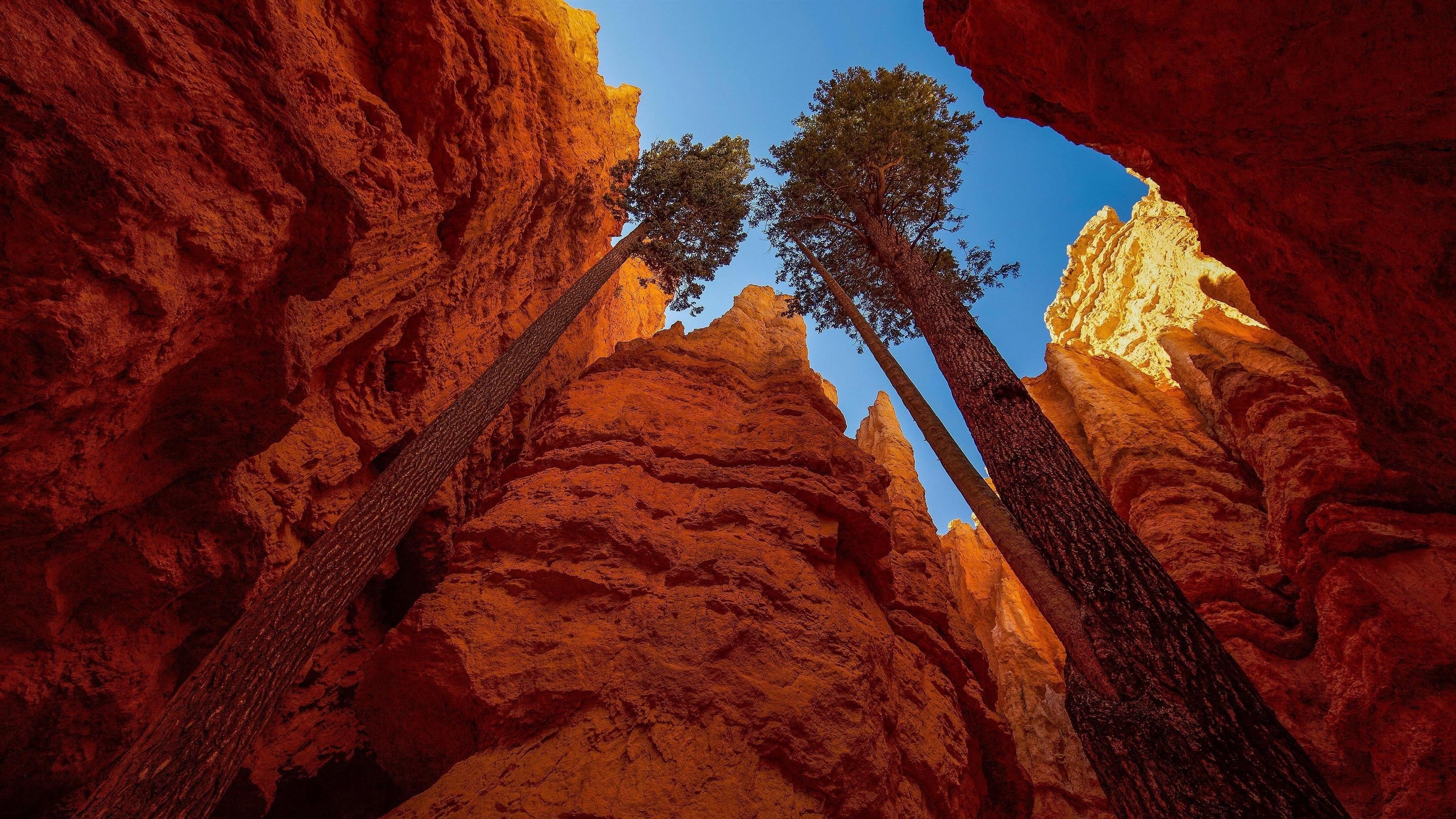 Высокие деревья между Национальным парком Брайс Каньон обои скачать
