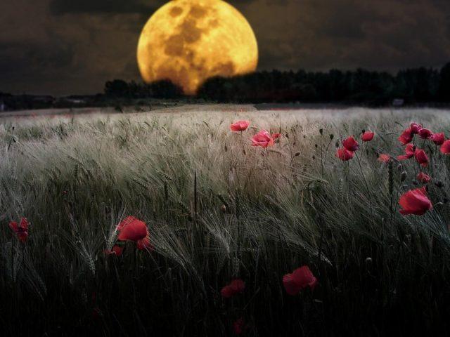 Четверть Луны в ночное время