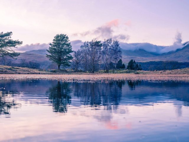 Деревья с отражением на реке с пейзажным видом на покрытые туманом горы природа
