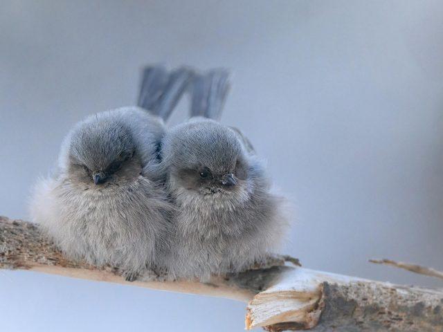 Пепельные птицы сидят на ветке дерева в размытом фоновом режиме птицы