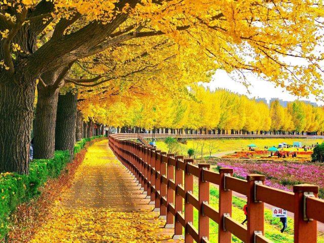 Желто-зеленые осенние листья деревья весеннее цветение деревянный забор осень