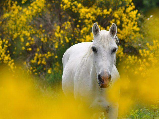 Животное лошадь
