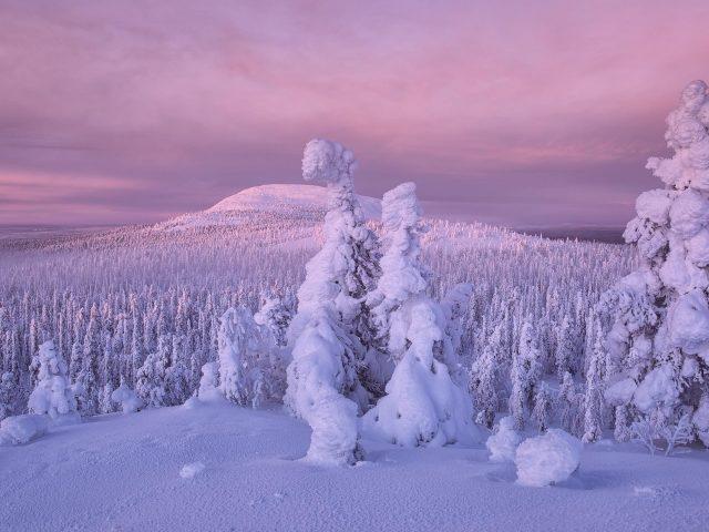 Земля зима деревья покрыты снегом природа