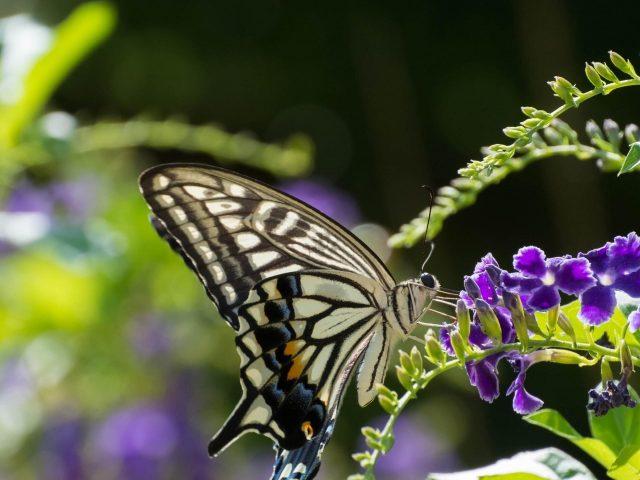Желтые черные линии бабочка на фиолетовых цветах на зеленом фиолетово-синем фоне бабочка