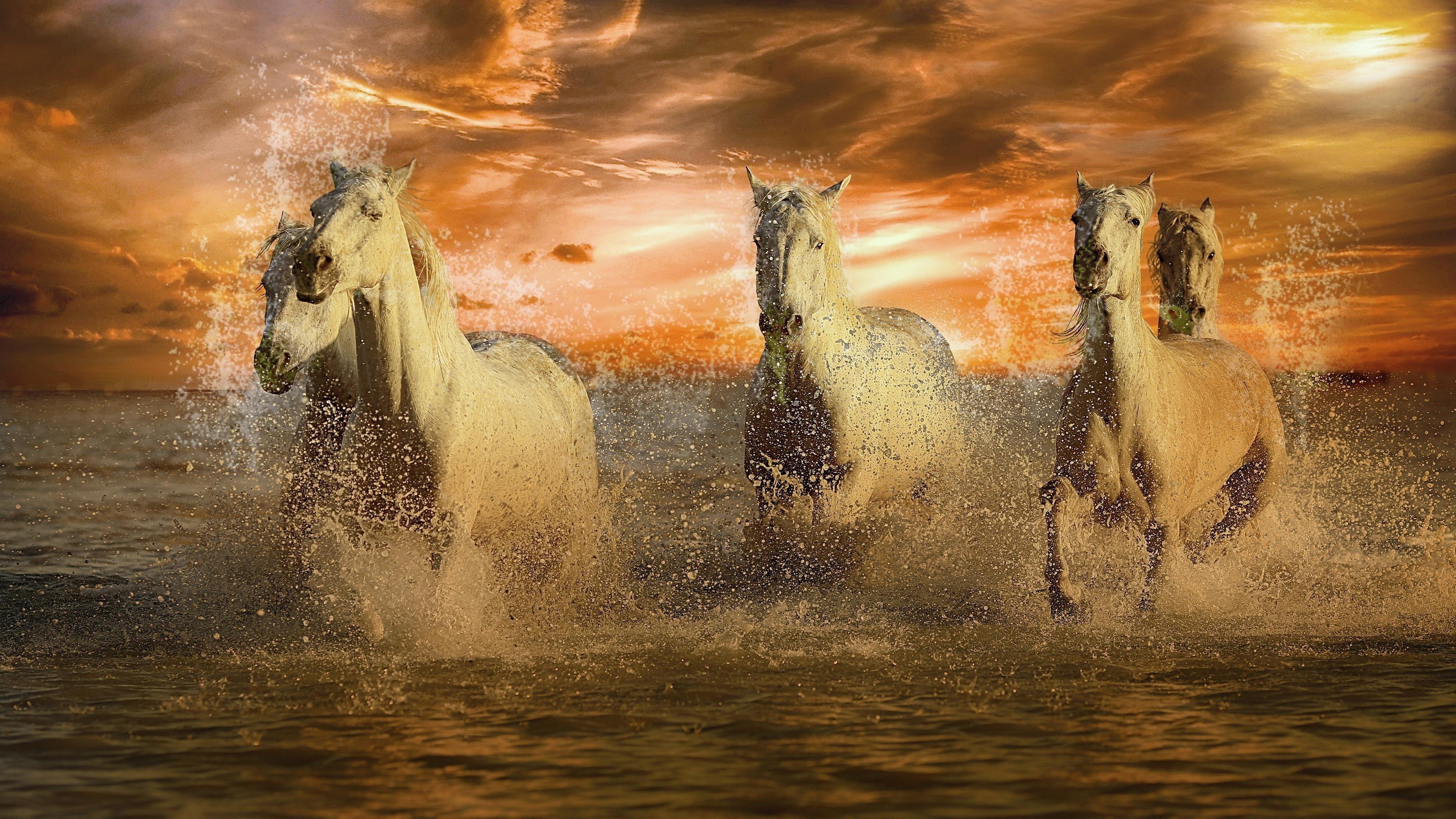 Бегут белые лошади обои скачать