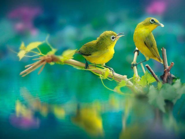 Милые желтые птицы сидят на палочке в водоеме с отражением животных