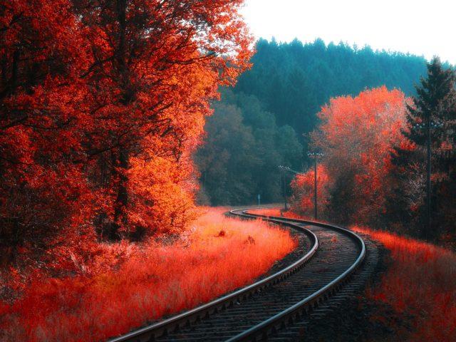 Железная дорога между красным цветком осенним лесом природой