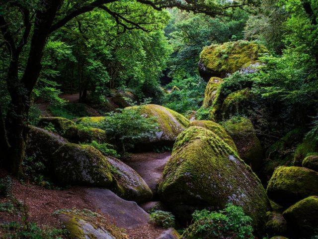 Зеленые деревья между покрытыми зеленью скалами в дневное время 1