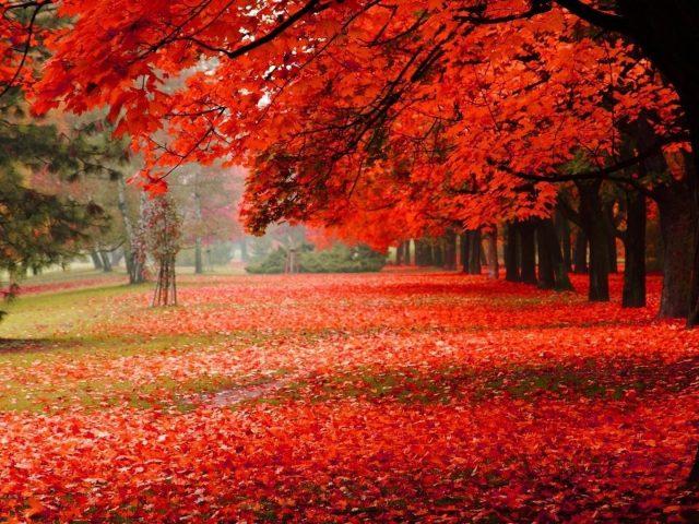 Красная осень весна лиственные деревья сухие листья на земле сад природа