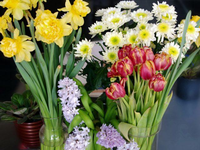 Ромашка,  тюльпан